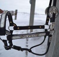 Dale Chavez Show Halter Horse Apha Aqha Classic Silver Gold Black Antique Mare