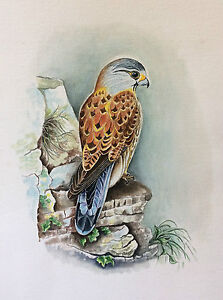 Large-Watercolour-Raptor-Faucon-Attributed-in-Mireille-Bailly