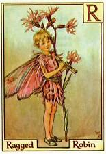 Ragged Robin Alphabet Flower Fairy Old Vintage Print by Cicely Mary Barker Lette