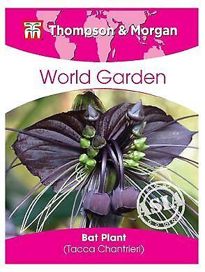 4 Graines Tacca Chantrieri THOMPSON /& Morgan-monde Jardin bat Plant