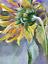 "Indexbild 2 - Aquarell Gemälde ""Sonnenblume ""Sunflower"" 20x27 cm watercolor paintings original"