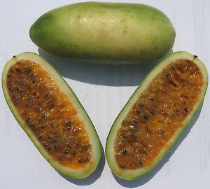 Banana-Passion-Fruit-Seeds-Rare-Tropical-Passiflora-Mollissima-10-Seeds