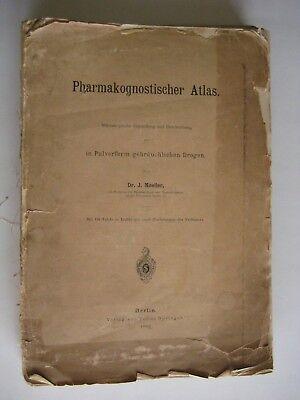 Ehrlich Pharmakognostischer Atlas Pulverform Drogen Moeller 1892 Botanik Anatomie Waren Des TäGlichen Bedarfs