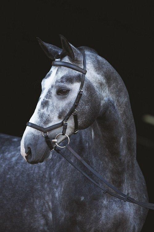 Horseware Rambo micklem competition Bridle frenillo, ledertrense, trensenzaum Top