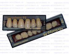 Denti x protesi ivoclar SR Vivodent PE - SR Orthotyp PE dentista odontotecnico