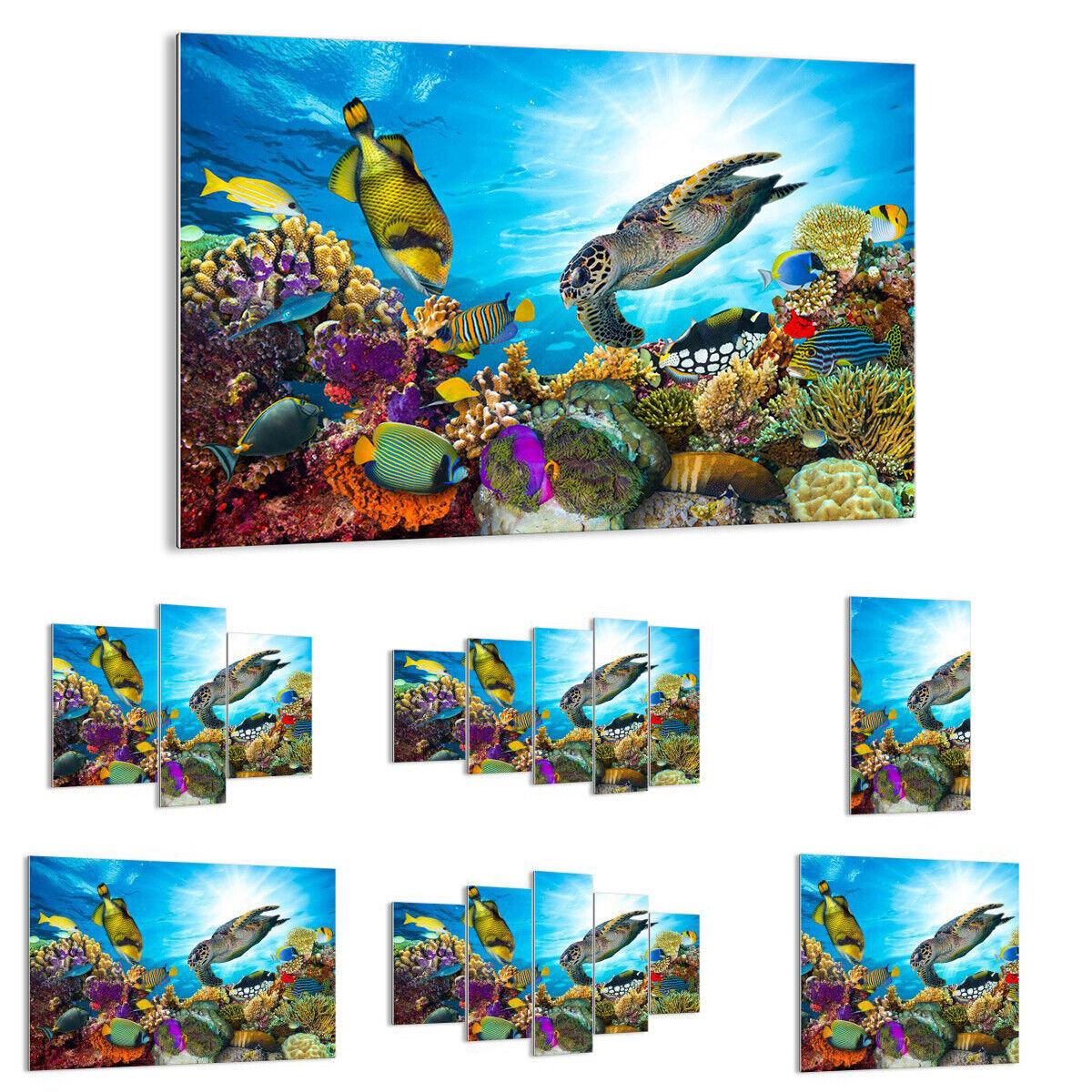 GLASS PRINTS Image Wall Art reef coral fish 3704 UK