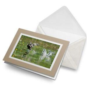 Greetings-Card-Biege-Eurasian-Common-Coot-Bird-21507