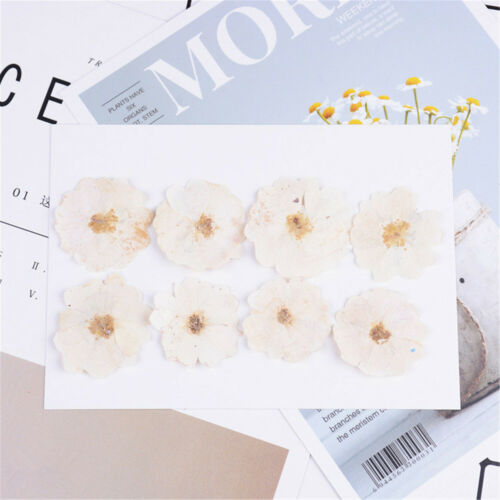 Real Dried Chinese Rose Flower Organic Collections DIY ART Floral Decoration