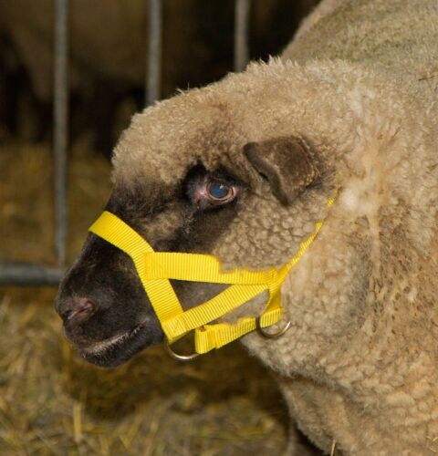 Kopfhalfter Halfter für Schafe und Böcke Schafhalfter Bockhalfter