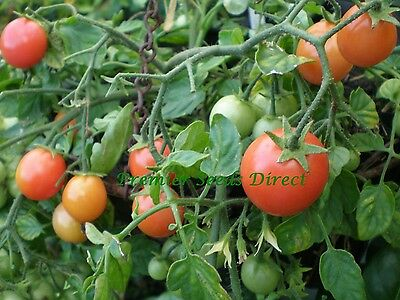 VEGETABLE TOMATO TUMBLER 50 FINEST SEEDS