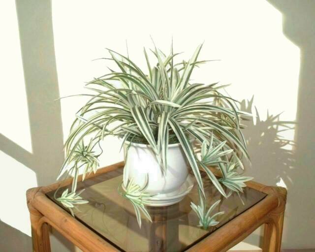 "Artificial Imitation Bush Cycas Fern 20.5/"" 52cm - Replica Faux Silk Plant"
