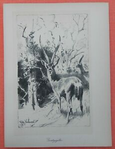 Grant-gazelle Nanger Granti Wilhelm Kuhnert Afrique Lithographie 1920-afficher Le Titre D'origine Grand Assortiment