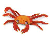 Sally Lightfoot Crab 261729 Galapagos Free Shipping / Usa W/ $25+ Safari