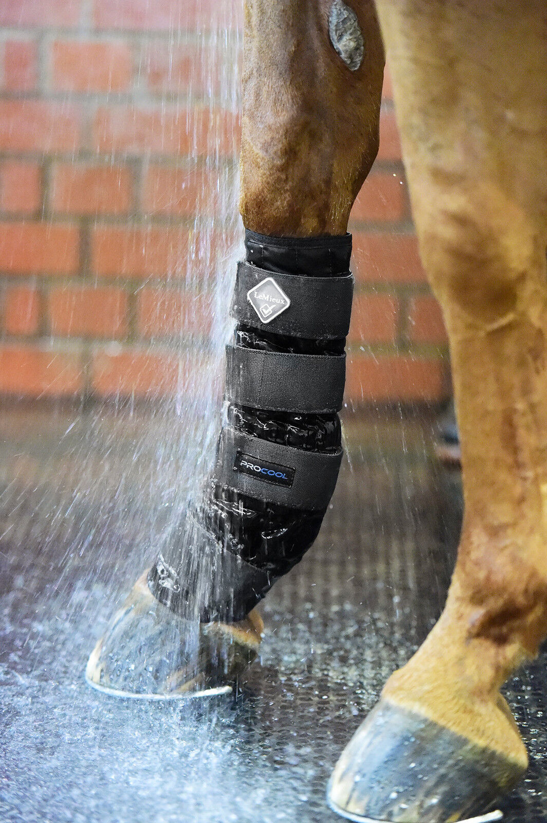 LeMieux PROCOOL Cold Water  Therapy Compression Boots Reduce Heal Tendon Swelling  all in high quality and low price