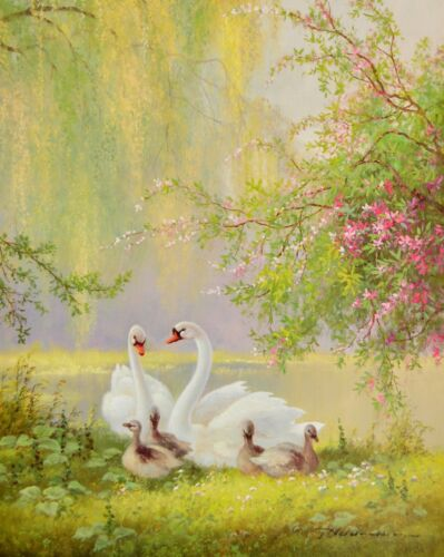 Neswadba Schwäne mit rosa Blueten Poster Kunstdruck Bild 50x40cm G