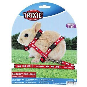 Arnes-de-conejo-y-plomo-Varios-Colores-Para-Pequenos-Conejos-6265