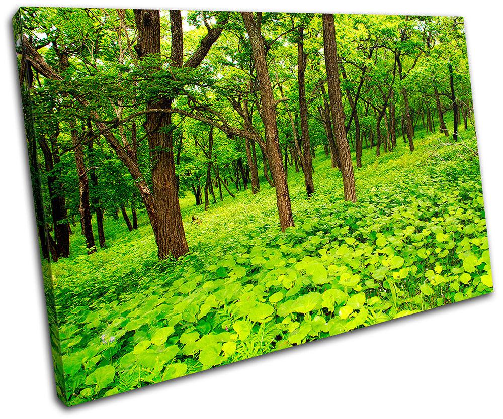 Forest Scene Foto Landscapes SINGLE LONA pared arte Foto Scene impresion 49cb4e