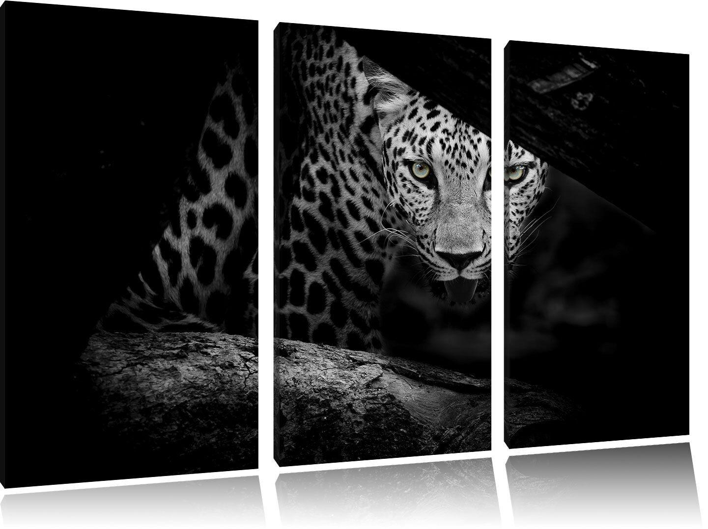 Curioso Guepardo Negro/Blanco 3-Teiler Lienzo Foto en Lienzo 3-Teiler Decoración de Pared 6d126b