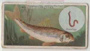 Gudgeon-Sportfishing-Fishing-With-Worm-Rod-Reel-c1910-Trade-Ad-Card