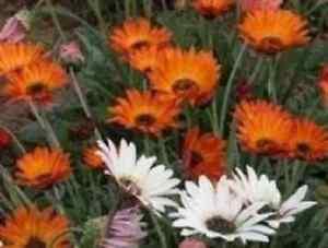 Odenwälder Jersey-sac de couchage prima klima slurps 2016 Choix de Couleur NEUF