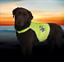 Hi-Vis-De-Seguridad-Perro-Viz-alta-Visibilidad-Chaleco-Reflectante-Abrigo-Luminoso-Neon-Amarillo miniatura 2