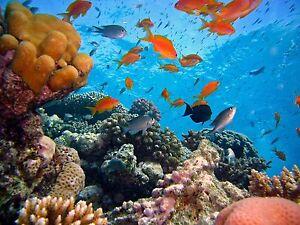 Image Is Loading Aquarium Decal Ocean Under Water Fish Beach Sea  Part 83