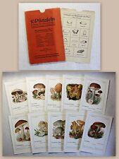 10 lavagne fungo a jühling andiamo nell'per funghi 1920 Mykologie stampe botanica