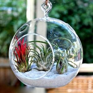 4-Pack-Large-Globe-Glass-Terrariums-Centerpiece-Wedding-DIY-Fairy-Garden-Decor