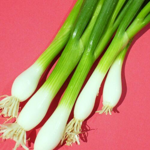 8,000 Seeds WHITE LISBON BUNCHING ONION ..traditional green-salad onion