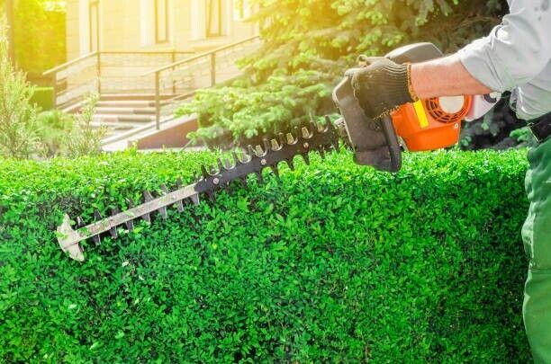 Hækklipning-havearbejde, tiltrædelse snarest muligt