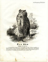 The Eagle-Owl, 1841 Original Antique Wood Engraving