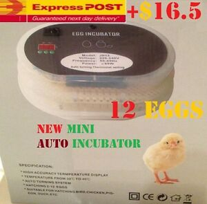 ACCURACY-Digital-Automatic-Mini-12-Eggs-Incubator-Poultry-Turner-Thermometer-Kit