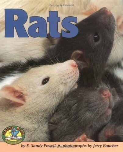 Rats (Early Bird Nature Books)