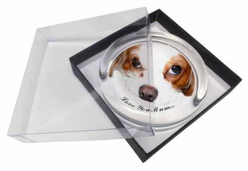 Cavalier King Charles 'Love You Mum' Glass Paper in Gift Bo, ADSKC57lymPW