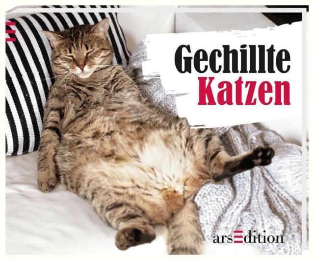 Vennebusch, Paulus - Gechillte Katzen /4