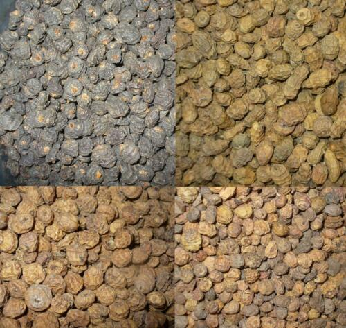 Tiger nuts UnPrepared particle Bait black//xl,large and standard size