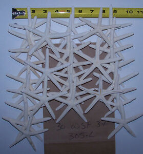 30 white finger starfish pencil star fish craft wedding decor Item # 305-L
