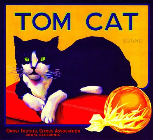 Tom Cat Brand fruit crate label art poster wall art heppy US Seller