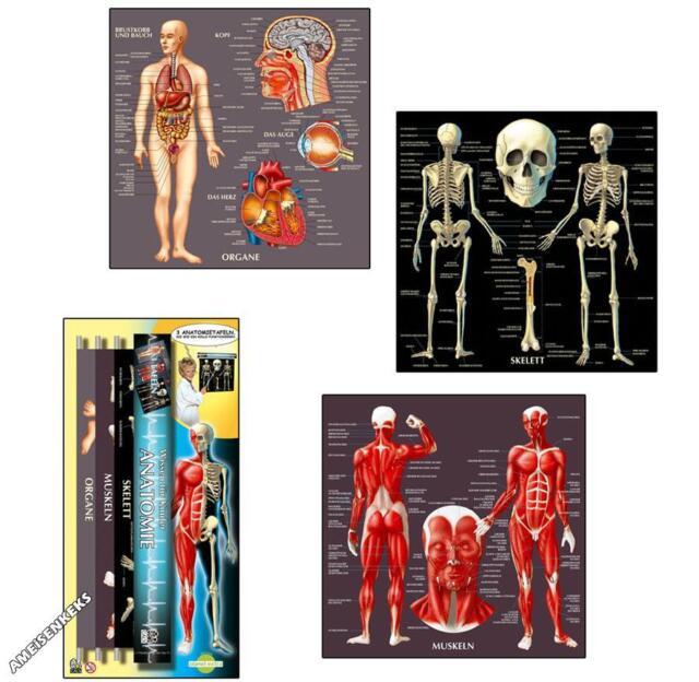 ANATOMIE-ROLLO Anatomierollo Anatomietafeln Lehrtafeln