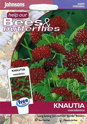 100% Kwaliteit Johnsons Seeds - Pictorial Pack - Flower - Knautia Macedonica - 50 Seeds Verfrissing