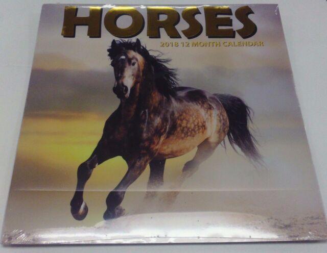 horses 2018 calendar 12 month 12 x 12 pony