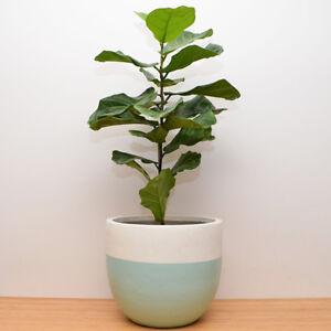 S M L Plant Pot Lightweight Hand Painted Planter Half Dip Ebay