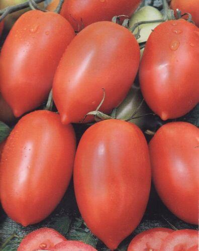 Organic Tomato Vegetable seeds Pertsevidny  from Ukraine average