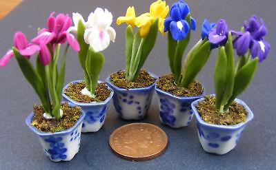 1:12 scale Blue Jacinthes /& roses rouges tumdee Maison De Poupées Fleur Jardin Accessoire