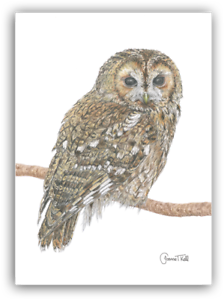 Tawny Con Dibujo De Búho Vida Silvestre Greeting Card-Impresión de dibujo original por Joanne T Kell