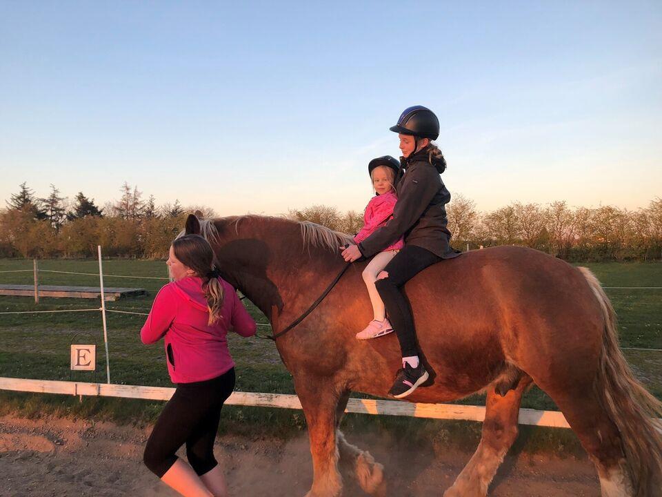 Anden race, vallak, 6 år