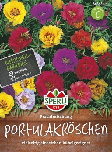 Sperli portulak Röschen portavasi adatto pietra giardino pianta semi per circa 30 pianta