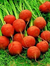 Seeds Sweet Carrot Paris Market Red Organic Heirloom from Ukraine