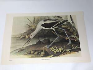 John-James-Audubon-Folio-Plate-270-American-Avocet-Limited-750