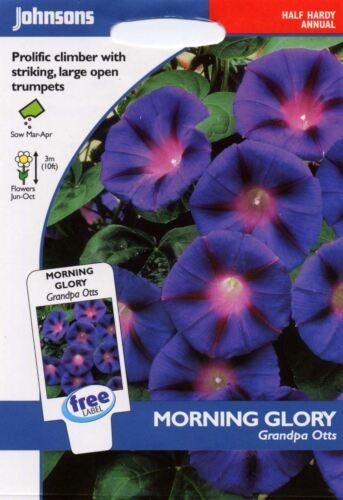 Blumen 30 Morning Glory Großvater Otts Bildhafte Packung Johnsons Samen